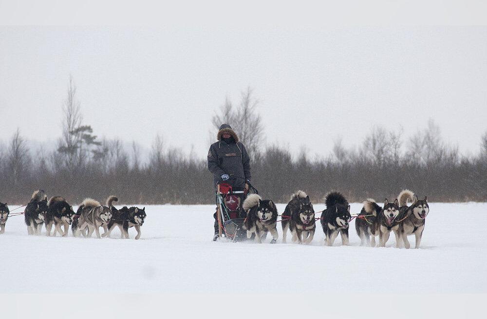 Курная баня, собачьи упряжки и джип-сафари: лучшие зимние развлечения в Эстонии
