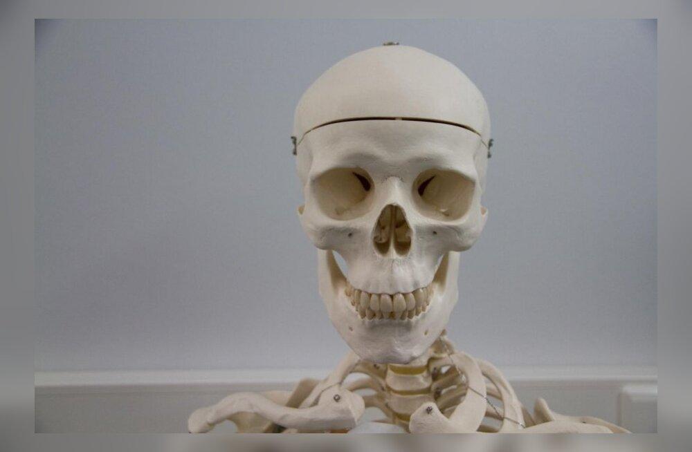 Illuka mõisa keldrist leiti inimluud