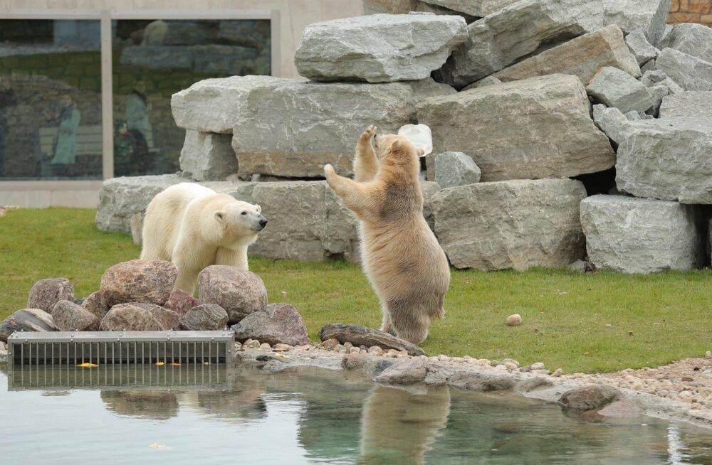 Tallinna loomaaia jääkarumaailma avamine