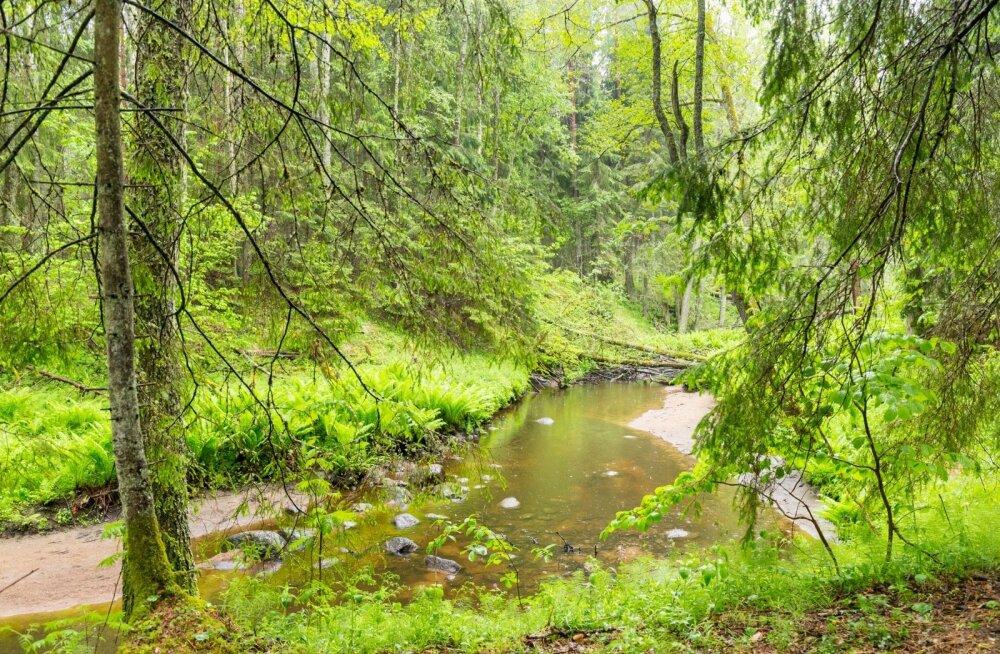 Homme selgub Haapsalus Eesti parim metsamajandaja ja toimub suurejooneline perepäev