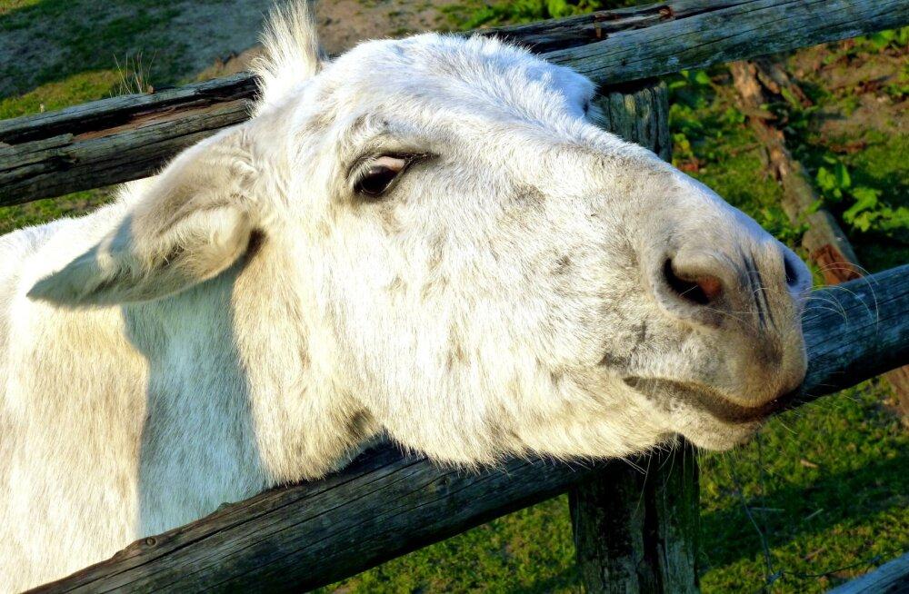 Бессмертие, копыта и еще 8 вещей, в которых люди уступают животным