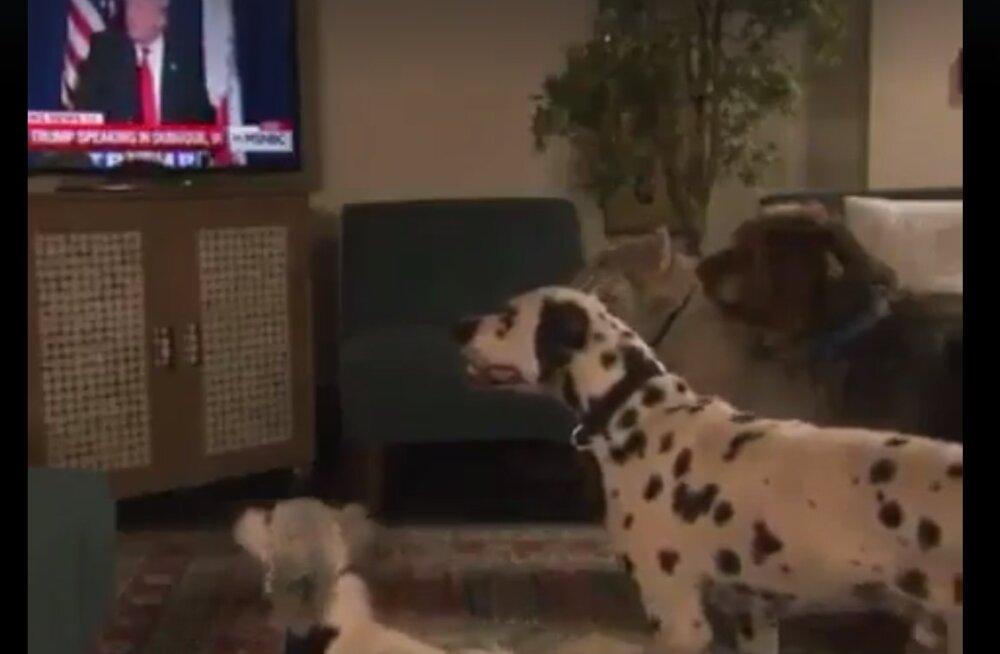VIDEO | Nalja nabani: Donald Trumpil piisab öelda vaid üks sõna ja koerad juba kuuletuvad