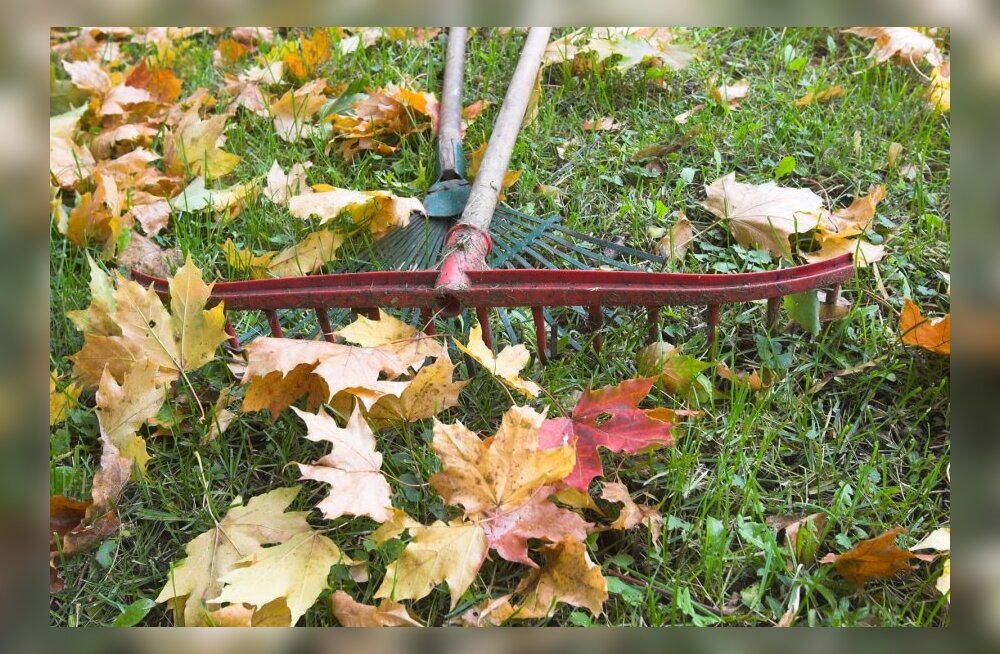 Kvaliteetsed aiatööriistad — suureks abiks igapäevastes aiatöödes