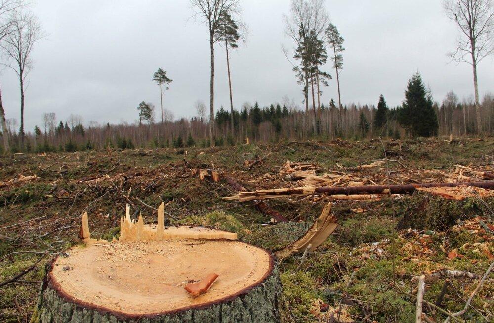 Mets on pärast lageraiet selline.