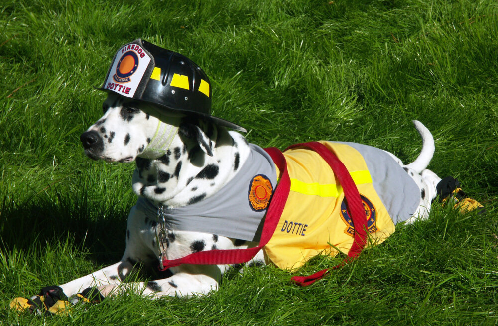 Liigutav hüvastijätt: tuletõrjujad korraldasid armastatud töökoera auks südamlikud matused