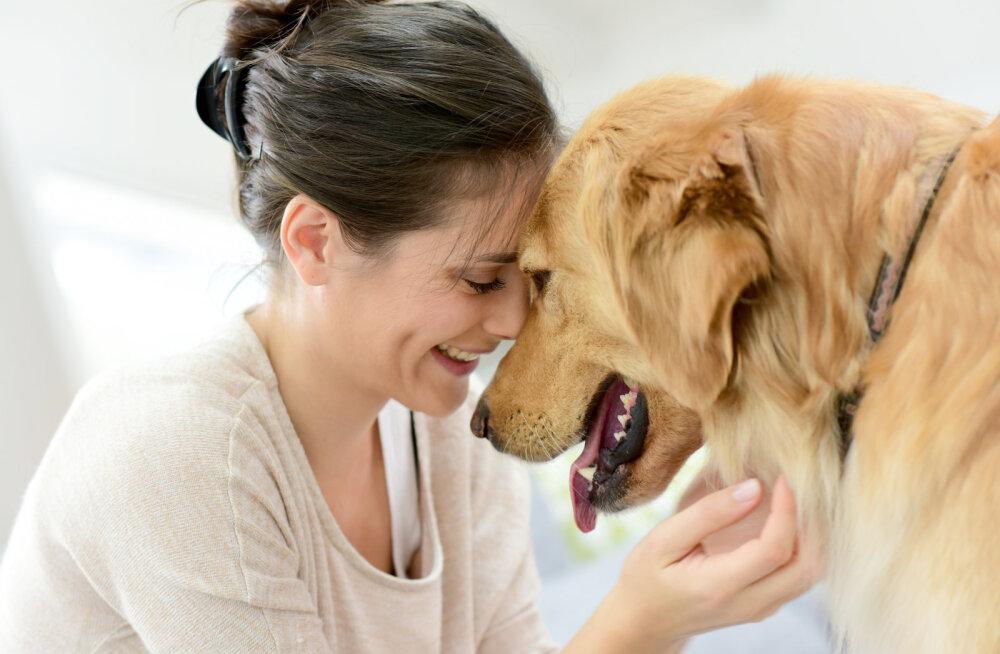 Kuus viisi, kuidas lemmikloom aitab depressiooni leevendada