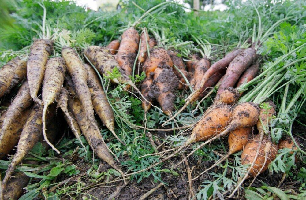 Uuring: tervisliku toitumise sünonüümiks on juurikaid ja puuviljad