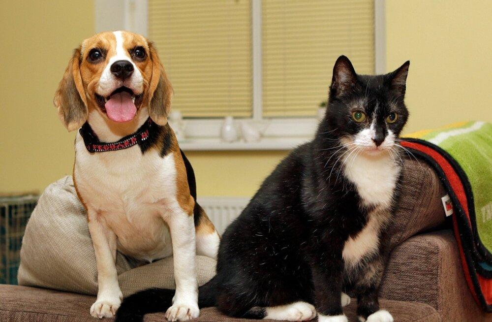 Koer - Estrellest Yahoo, hüüdnimega Google ja kass Maxi.