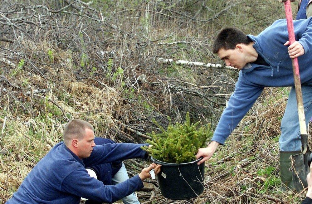 RMK, metsa istutamine
