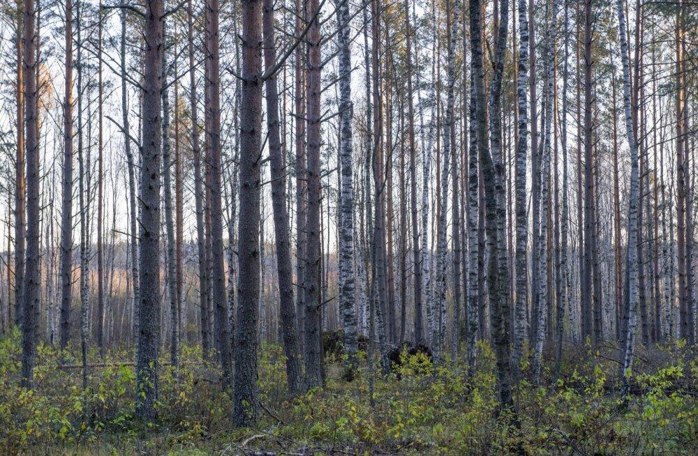 Metsakaitsjad matkasid Vorbusele protestimaks uue tselluloositehase vastu