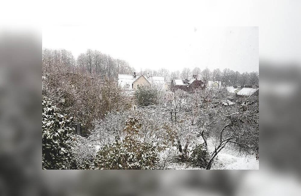 ФОТО и ВИДЕО читателей: Зима идет! Во многих уголках Эстонии выпал первый снег