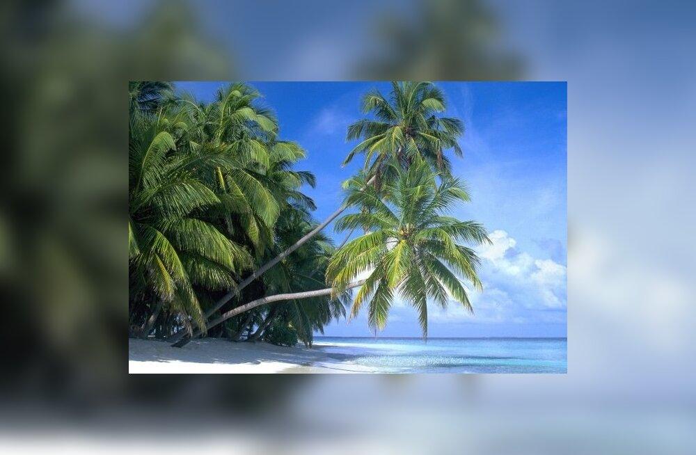 Palm-Paradise-Maldive-Islands (2)