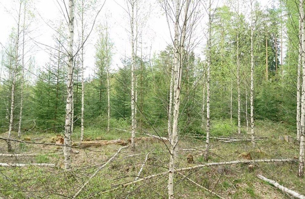 VIDEO: Metsaomanikud plaanivad toetuse abiga hooldada üle 10 tuhande hektari metsa