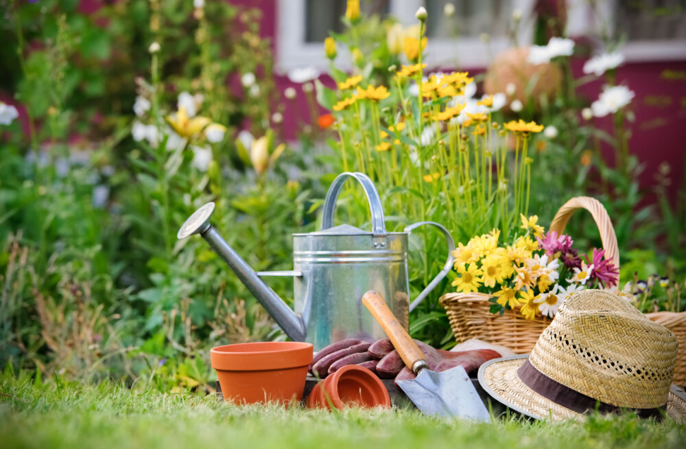 Kuidas looduslikul moel taimi kahjurite eest kaitsta