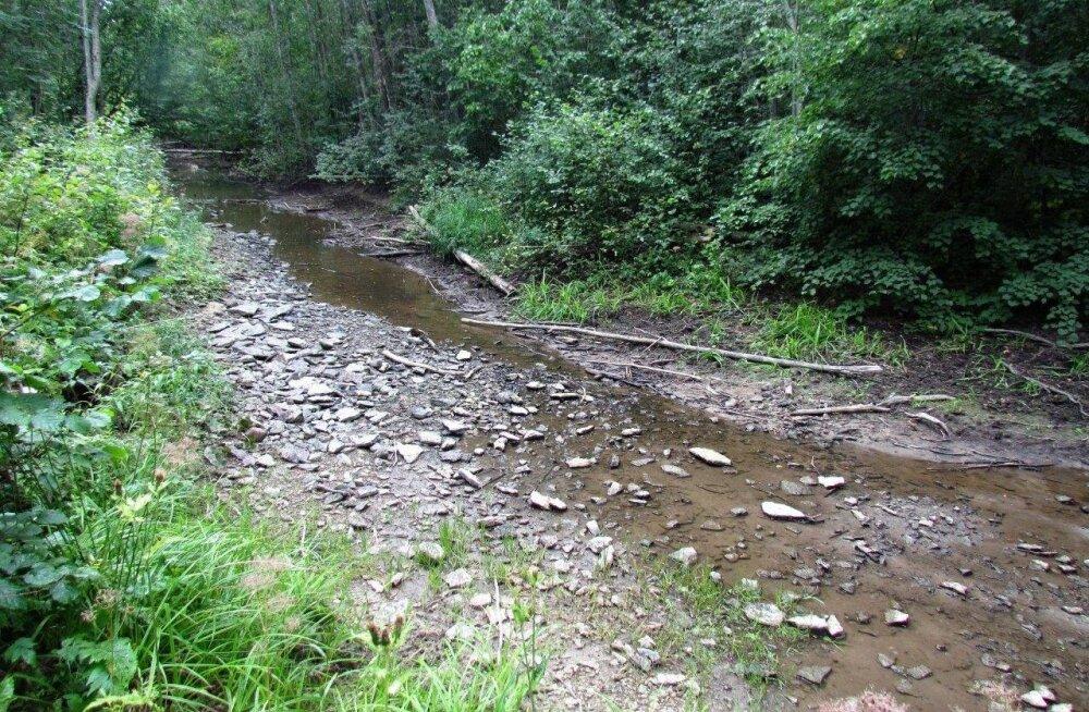 Leili metsalood | Kuiva jalaga läbi jõe