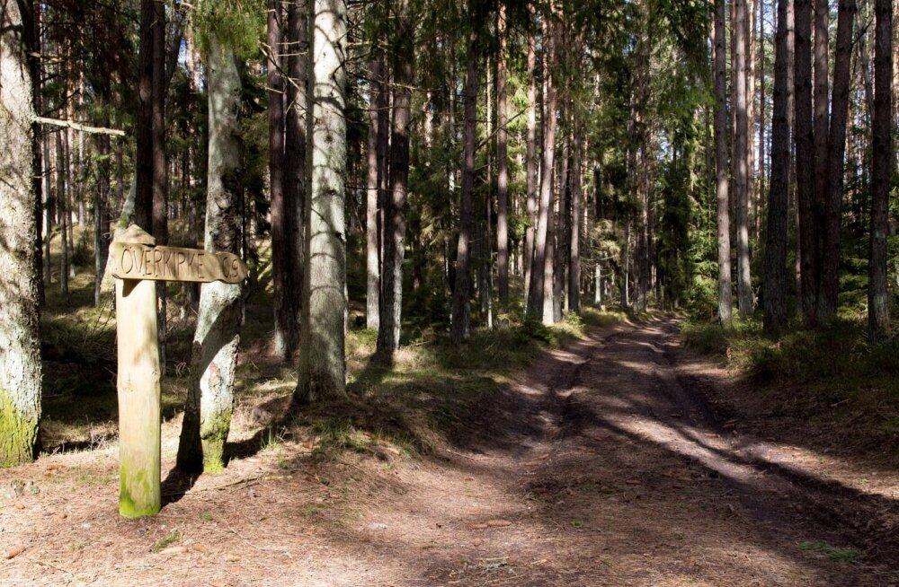 Ruhnu metsateedel on mõnus joosta.