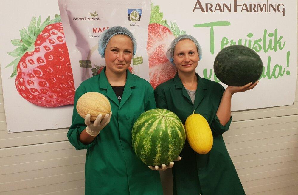 AranFarmingu arbuusisaak oli üle 2,5 tonni ja suurimad viljad kaalusid 12 kg.