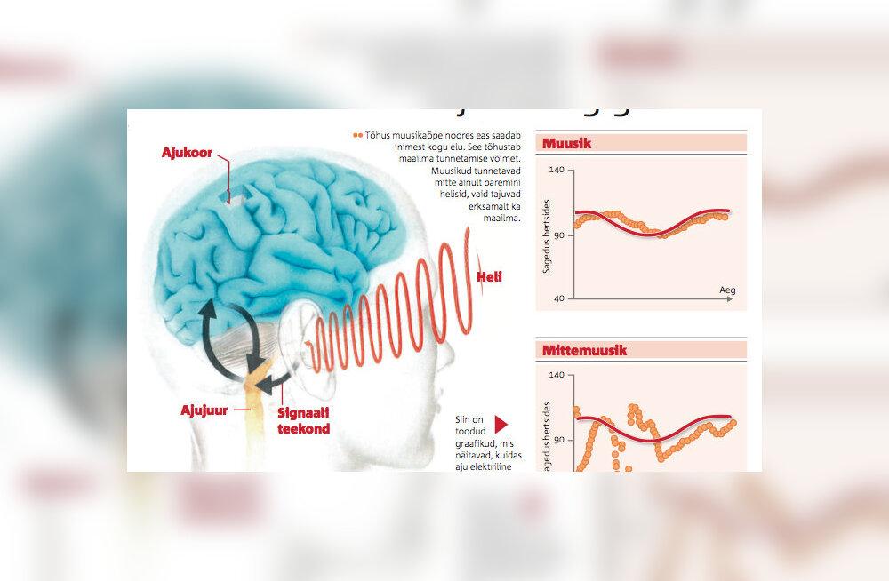 Võtkem õppust oma ajust