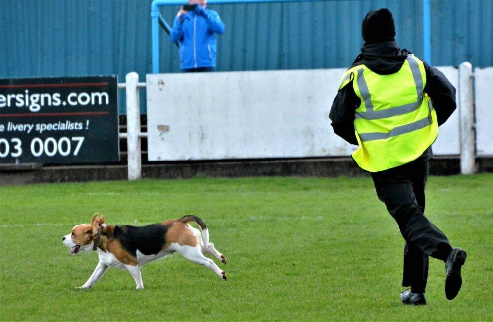 Koer jalgpalliväljakul