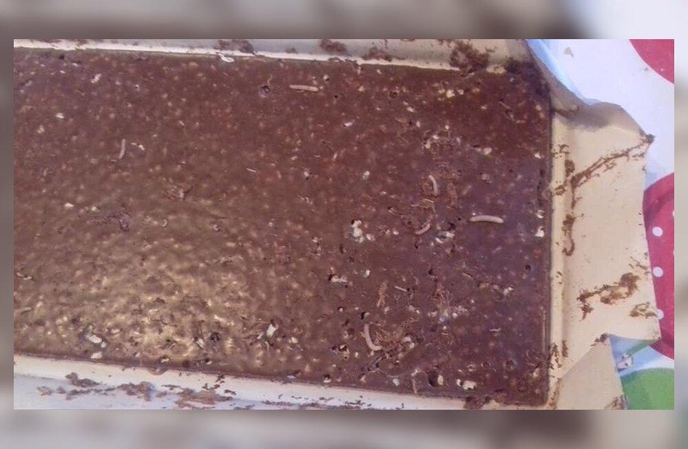ФОТО: Приятного аппетита! Шоколадка Kalev кишела червяками