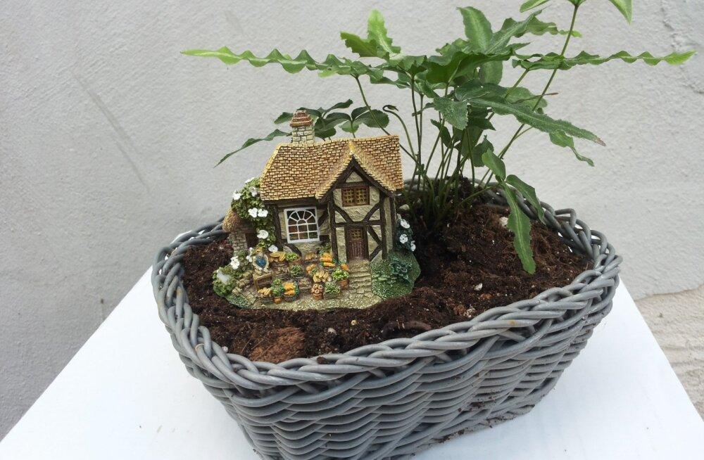 Pisikese maja taga kasvab kreeta äärisjalg.