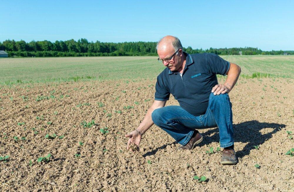 Einar Saar kinnitab, et põllumuld on juba väga kuivaks muutunud ja see takistab ühtlast idanemist.