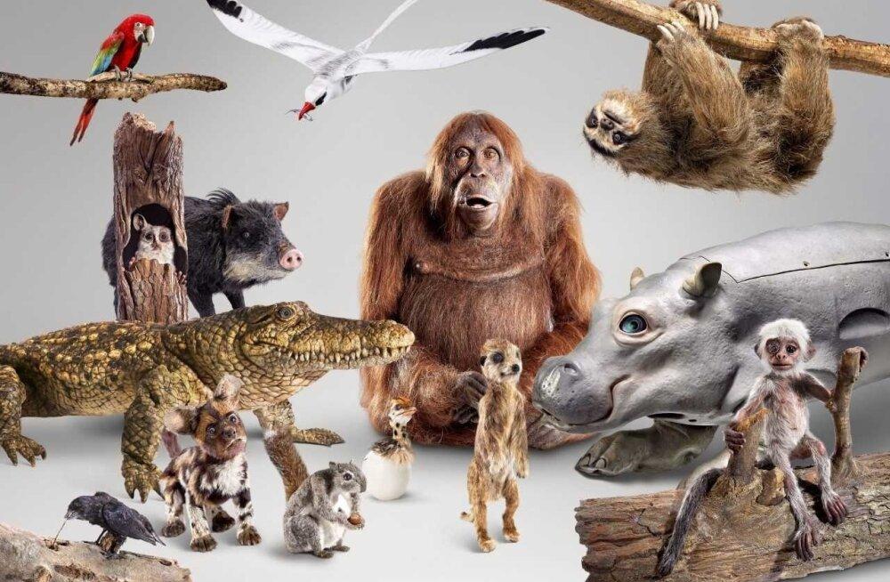 See seltskond loomi on kõik tegelikult kaamerad. Nad liiguvad ja häälitsevad, aga neisse kõigisse on peidetud kaamerad. Vaatajale avaneb väga huvitav ja kohati naljakas sissevaade loomade ellu.
