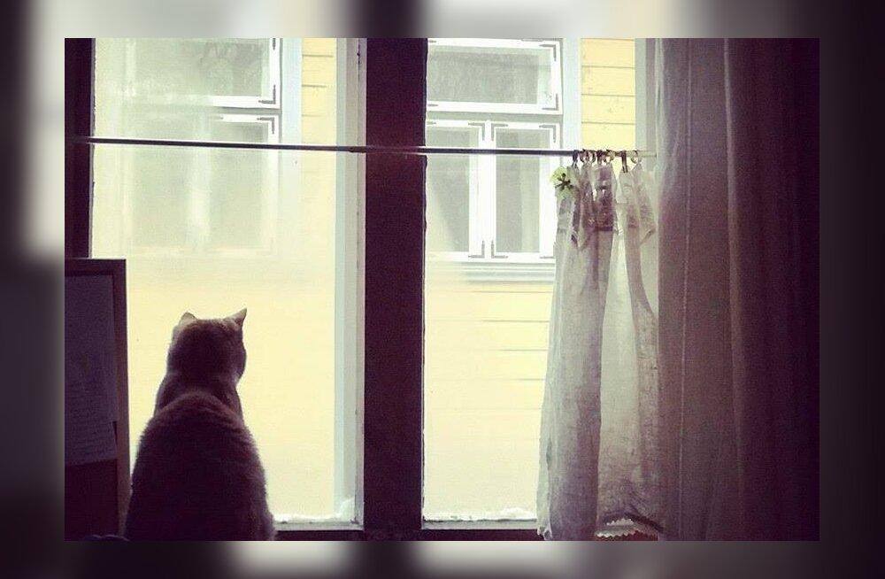 Ühe kassi lugu: hukkamisele viidud noor kodukass Ruudi