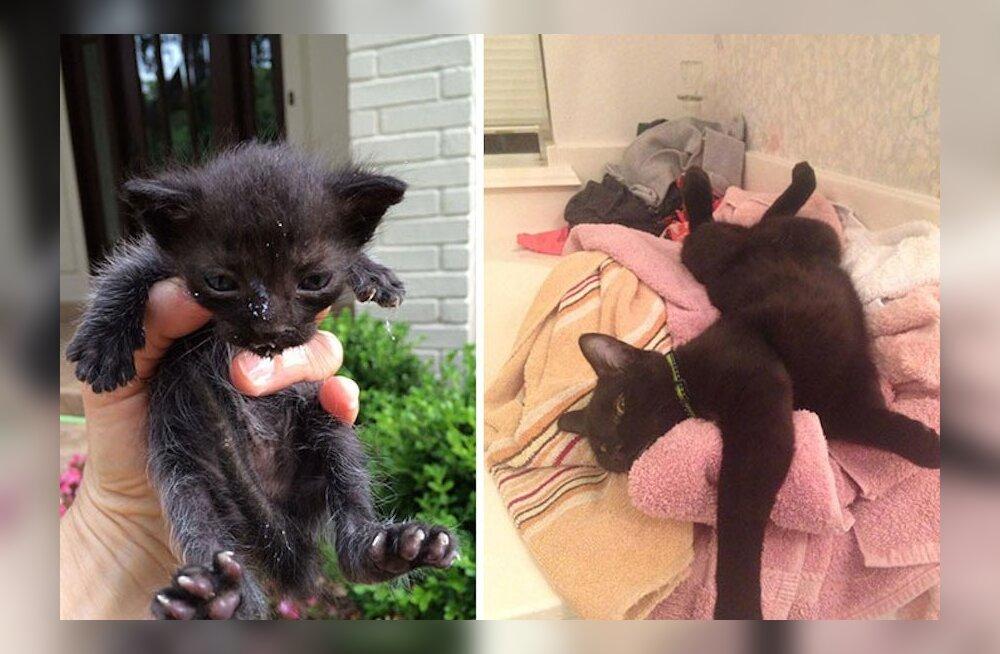 FOTOD | Vaata, kuidas muutuvad täiesti armetus seisus kassid, kui neile pakkuda kodu ja hoolitsust