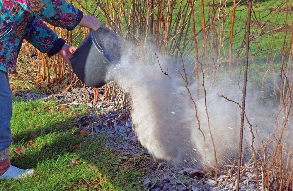 Puutuhk sobib ka marjapõõsastele. Tuhka võiks mullapinnal olla paarimillimeetrise kihina.