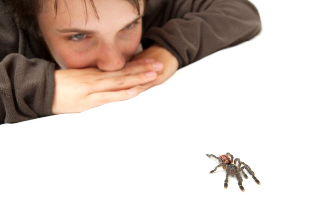 Боюсь, боюсь: как справиться с фобией