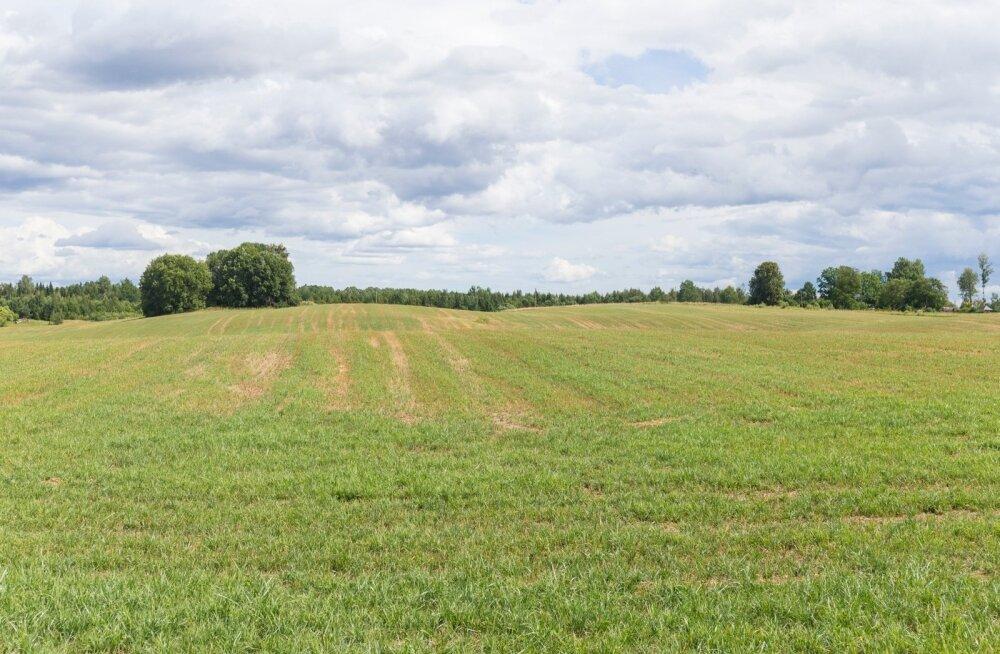 Avo Kruusla ja põua käes kannatavad põllud