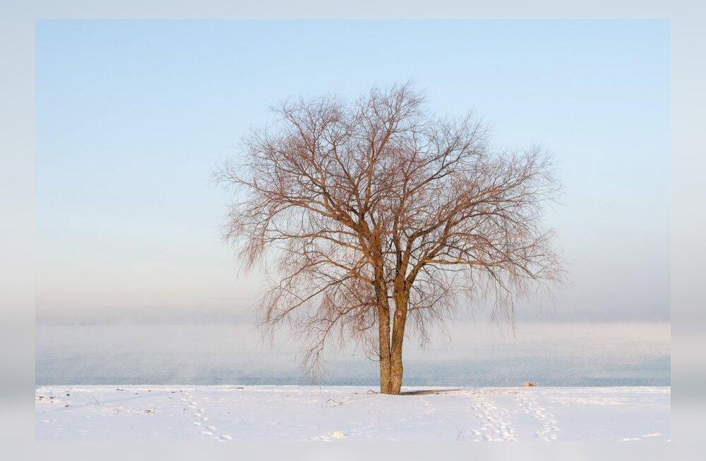 Korterielanikud, ettevaatust! Loe, kuidas suured puud kortermaja juures seavad ohtu teie elu ja vara