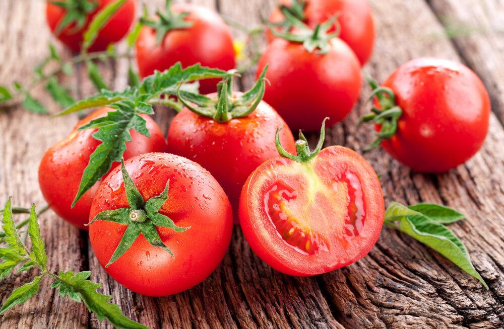 HÜVA NÕU | Kuidas kasta ja väetada tomatitaime?