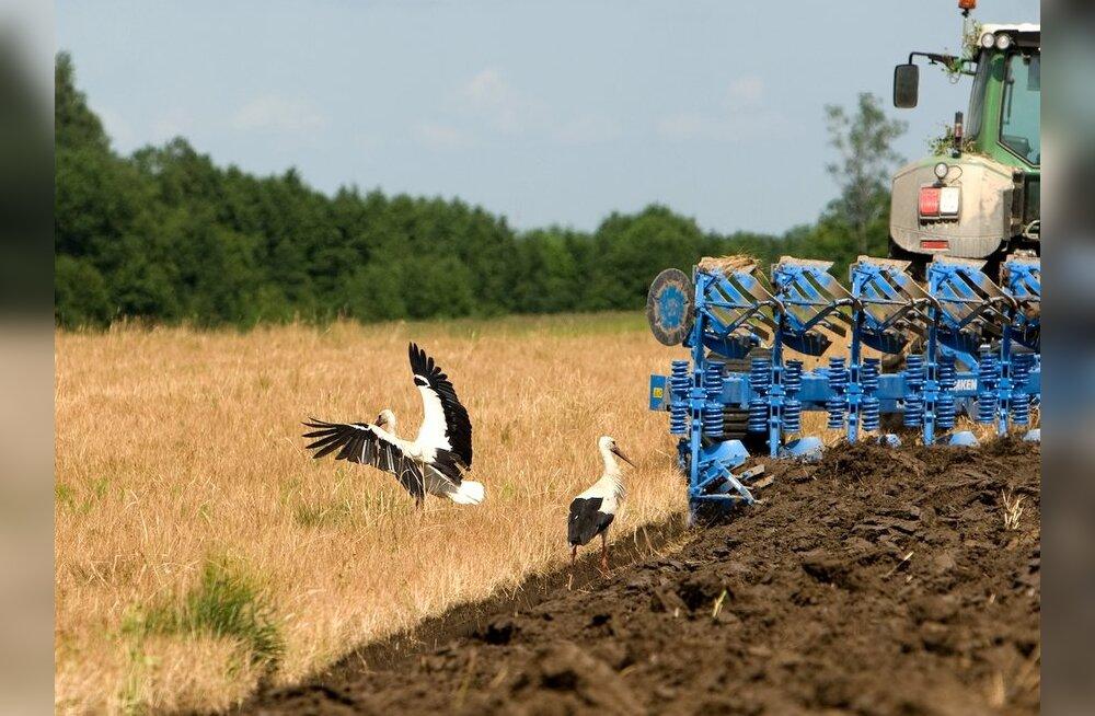Mida mahepõllunduses toodetakse