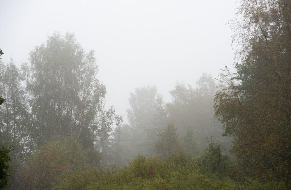 Vaiksed udused ilmad iseloomustavad hingedeaega.