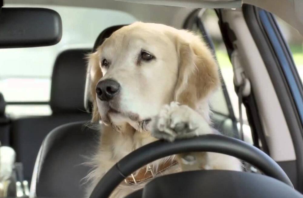 7 asja, mida ära oma koerale kunagi tee