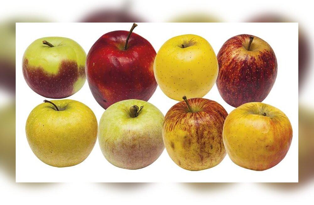 Выбираем лучшие магазинные яблоки: чем обусловлена цена и в каких меньше нитратов?