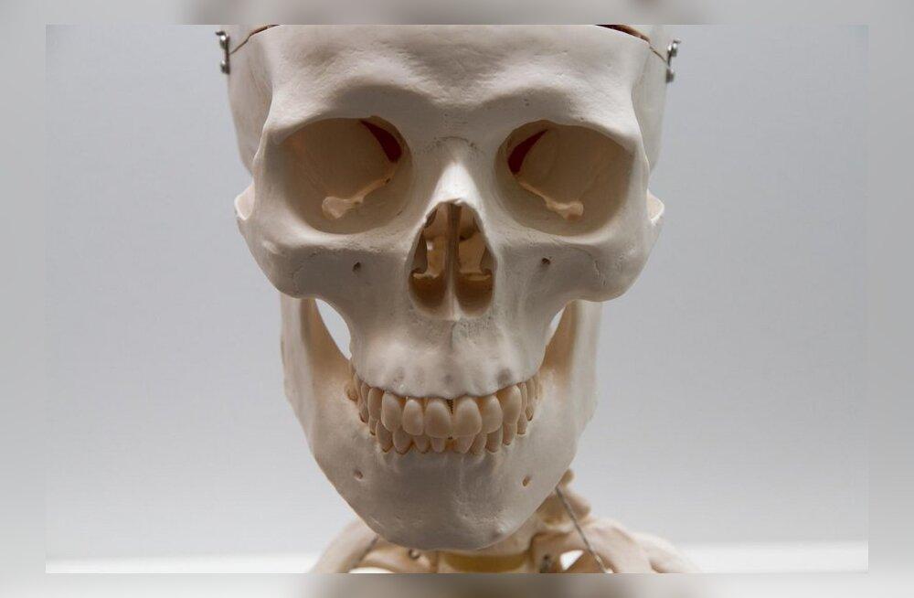 Skelett röntgenikabinetis