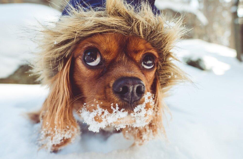 Salakaval pakane: külm ilm peidab endas mitmeid ohte