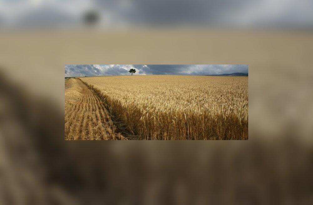Maailm nagu Monsanto tahab (dokumentaalfilm)