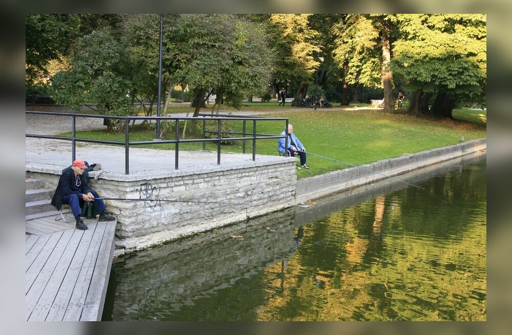 ФОТО читателя Delfi: Пруд Шнелли - хорошее место для рыбалки в центре Таллинна