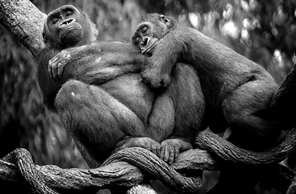 TEST: kui oled kõrvuni armunud, siis millist looma meenutad kõige rohkem?