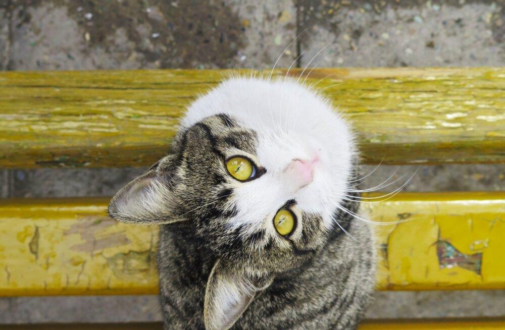 Põnev kassimaailm | Vaata, milliseid mänge meeldib hiirekuningatele kõige enam mängida