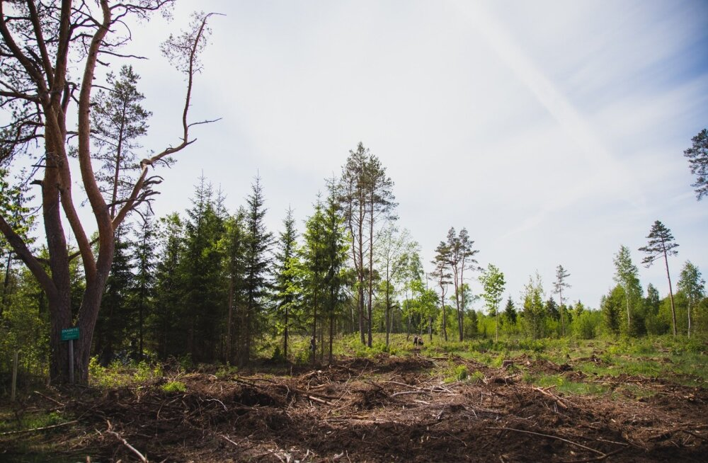 Metsa raiumist ei tohi segi ajada metsa raadamise või lagastamisega.
