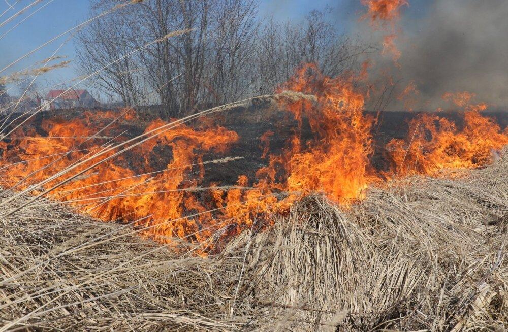 Päästjad hoiatavad: sinu lõkkest ei tohi saada teiste inimese mure