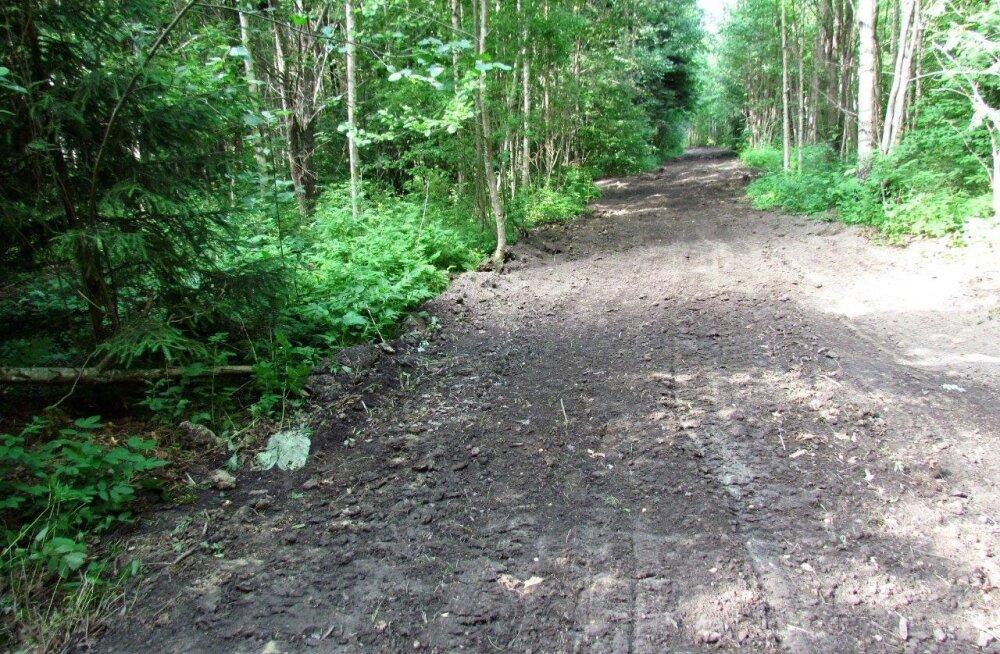 Leili metsalood | Mullase metsatee lugu