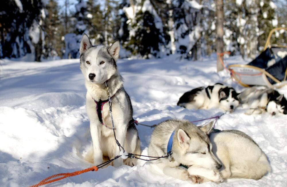 5 põhjust minna veel sel talvel Lapimaale ka siis, kui suusatamine üldse ei köida