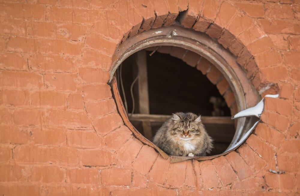 Peter Singer: lemmikloomad ei ole olemas selleks, et teile meeldida