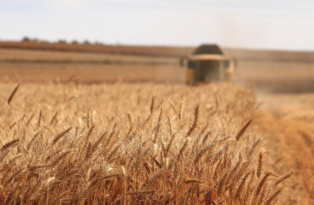 Orissaare päästekomando sõitis appi vilja koristama
